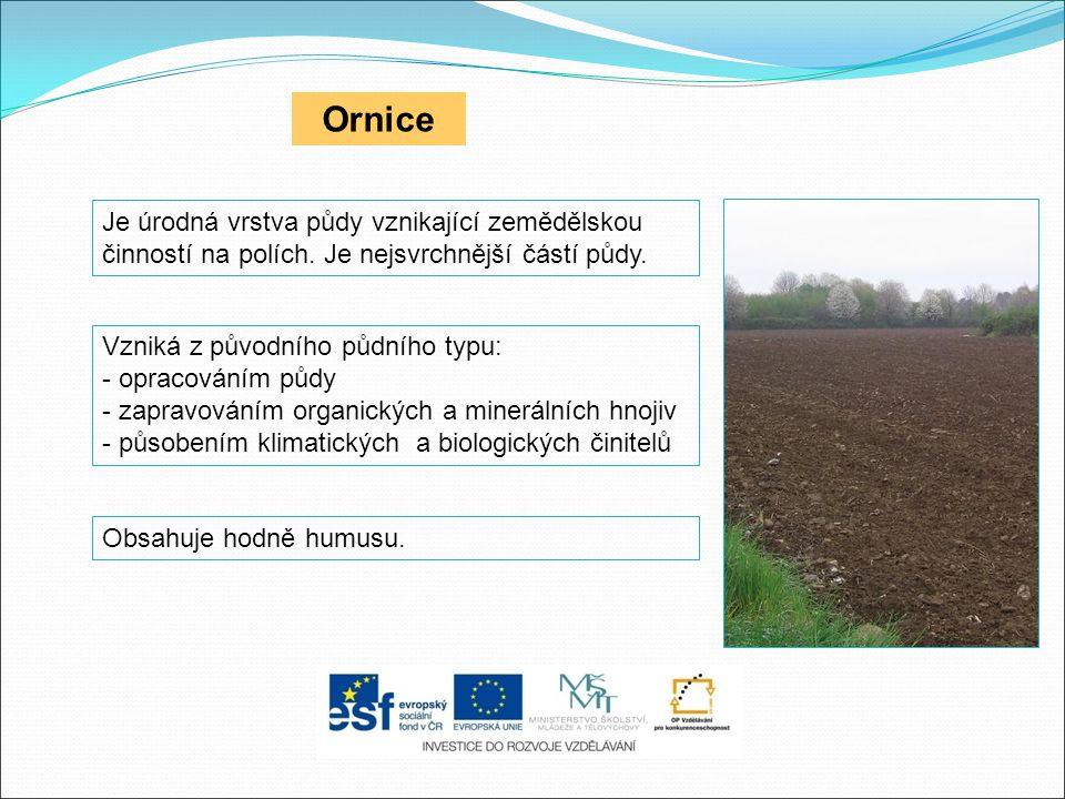 Ornice Je úrodná vrstva půdy vznikající zemědělskou činností na polích. Je nejsvrchnější částí půdy. Obsahuje hodně humusu. Vzniká z původního půdního