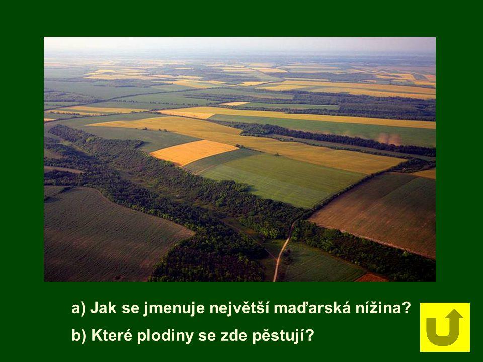 a) Jak se jmenuje největší maďarská nížina? b) Které plodiny se zde pěstují?