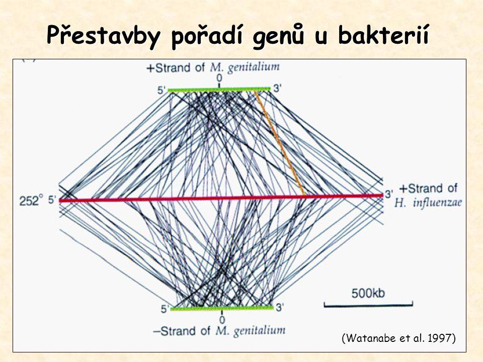 Přestavby pořadí genů u bakterií (Watanabe et al. 1997)