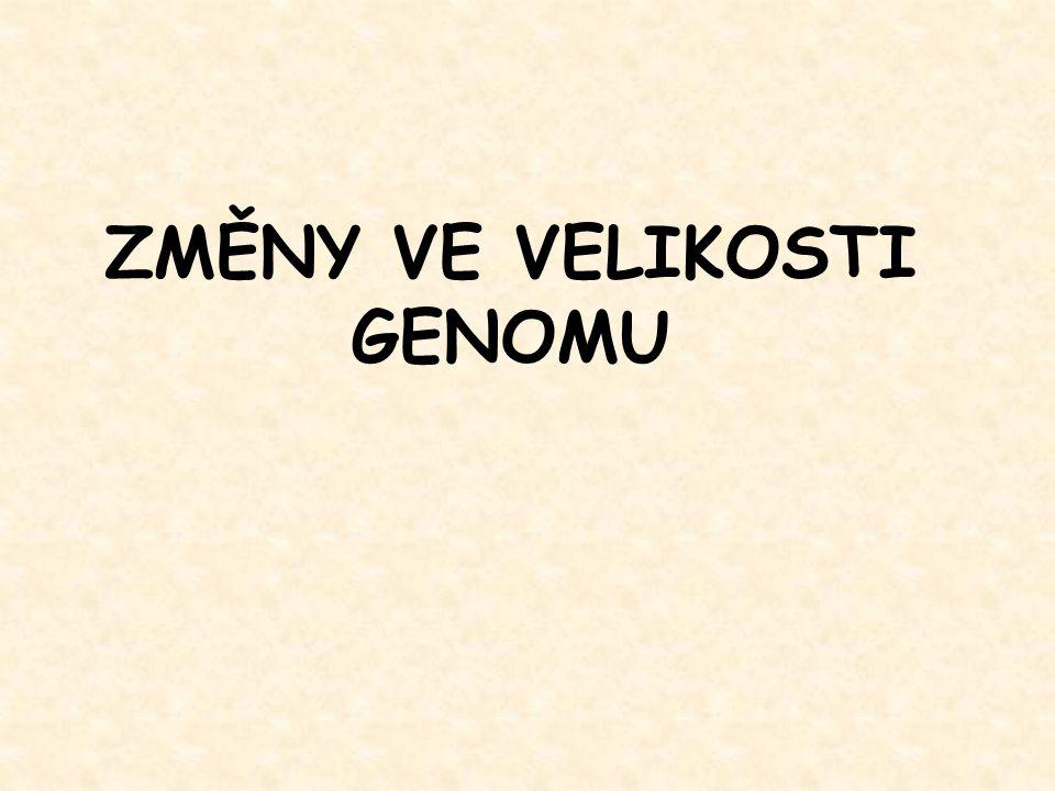 """Recyklace pohlavních chromosomů u drozofily První Y chromosom: """"original Y : - vymizel před více než 60 mil."""