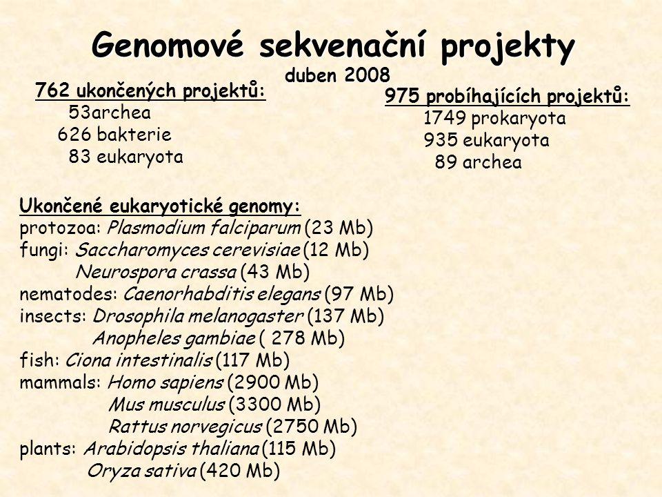 Genomové sekvenační projekty duben 2008 762 ukončených projektů: 53archea 626 bakterie 83 eukaryota Ukončené eukaryotické genomy: protozoa: Plasmodium