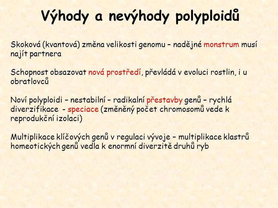 Polyploidní plodiny - tetraploidi: kukuřice, bavlna, brambor, zelí - hexaploidi: pšenice, chrysantéma - oktoploidi: jahodník