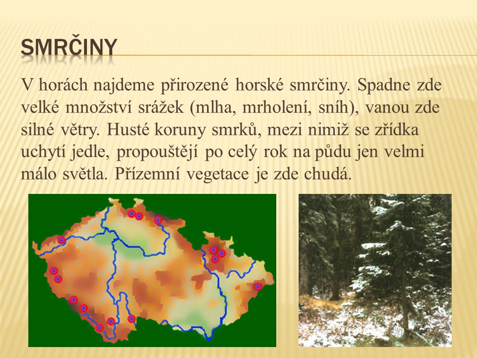 V horách najdeme přirozené horské smrčiny. Spadne zde velké množství srážek (mlha, mrholení, sníh), vanou zde silné větry. Husté koruny smrků, mezi ni