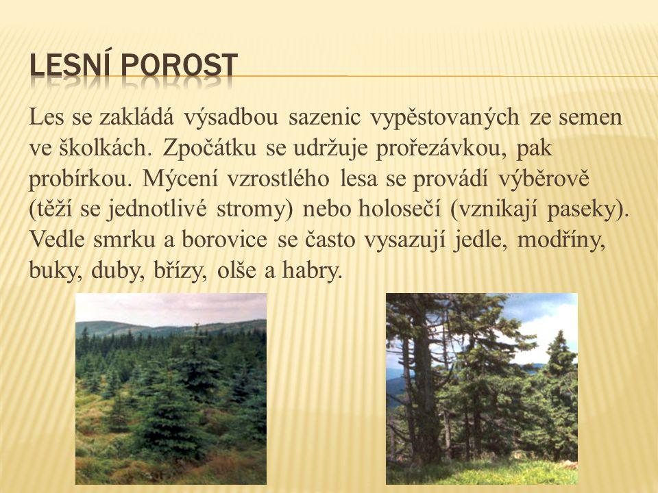 Les se zakládá výsadbou sazenic vypěstovaných ze semen ve školkách. Zpočátku se udržuje prořezávkou, pak probírkou. Mýcení vzrostlého lesa se provádí