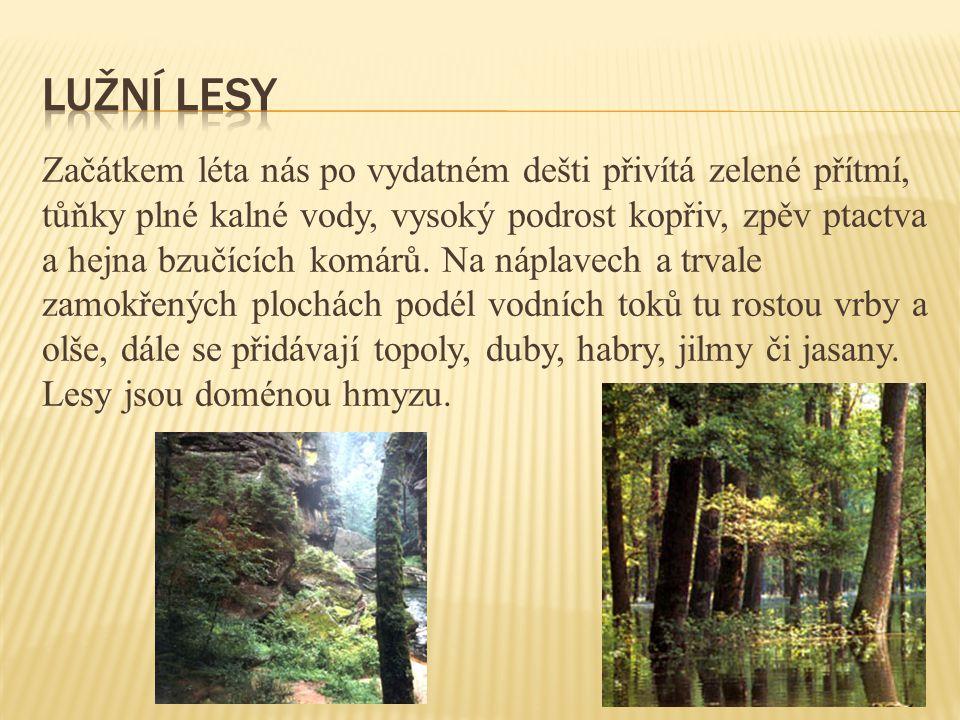Tyto teplomilné háje rostly na nejúrodnějších půdách, takže jako první z lesů ustoupily polím.