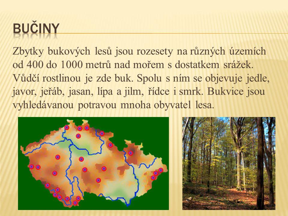 Zbytky bukových lesů jsou rozesety na různých územích od 400 do 1000 metrů nad mořem s dostatkem srážek. Vůdčí rostlinou je zde buk. Spolu s ním se ob