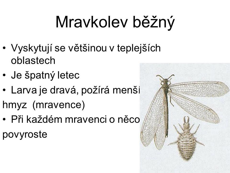 Mravkolev běžný Vyskytují se většinou v teplejších oblastech Je špatný letec Larva je dravá, požírá menší hmyz (mravence) Při každém mravenci o něco p