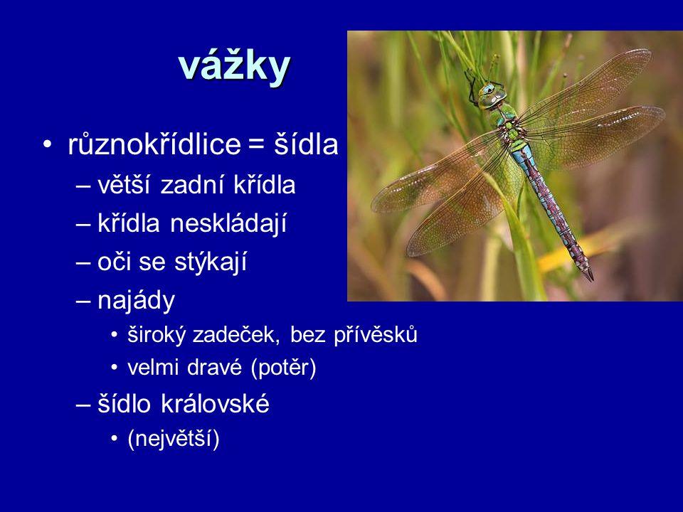 vážky různokřídlice = šídla –větší zadní křídla –křídla neskládají –oči se stýkají –najády široký zadeček, bez přívěsků velmi dravé (potěr) –šídlo krá