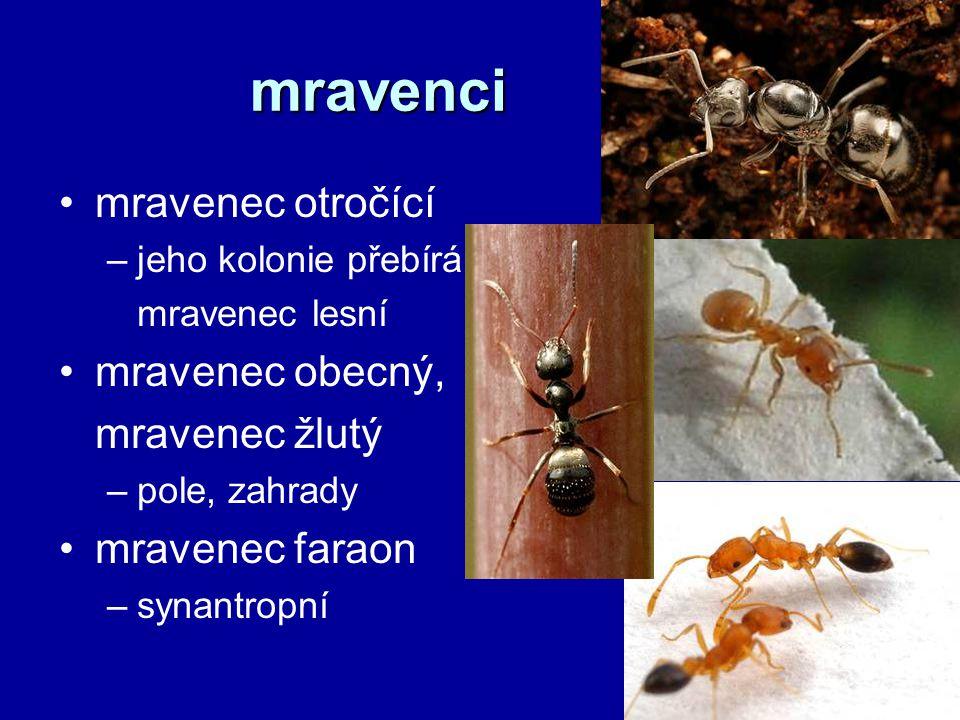 mravenci mravenec otročící –jeho kolonie přebírá mravenec lesní mravenec obecný, mravenec žlutý –pole, zahrady mravenec faraon –synantropní