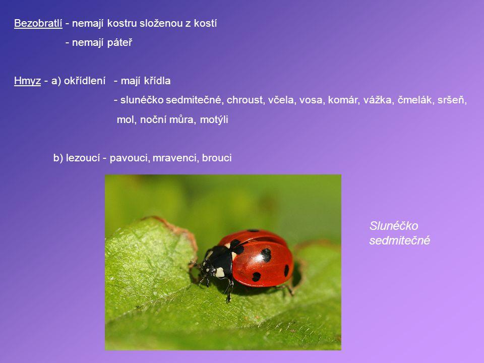 Bezobratlí - nemají kostru složenou z kostí - nemají páteř Hmyz - a) okřídlení - mají křídla - slunéčko sedmitečné, chroust, včela, vosa, komár, vážka