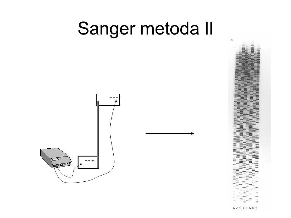 Sanger metoda II + + + _ _ _