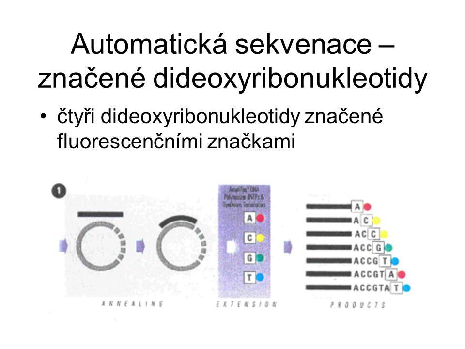 Automatická sekvenace – značené dideoxyribonukleotidy čtyři dideoxyribonukleotidy značené fluorescenčními značkami