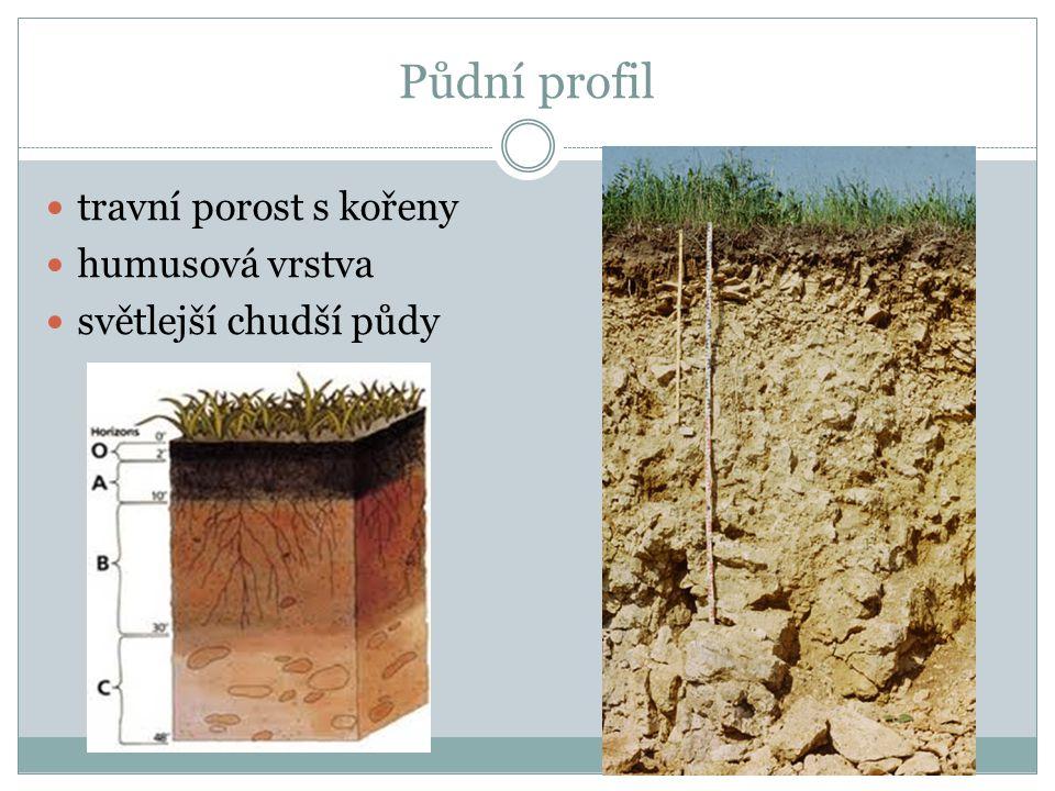 Typy půd Černozem – nejúrodnější půda, obsahuje hodně humusu, má černou barvu, výskyt – v nížinách Hnědozemě - méně humusu, patří také mezi úrodné půdy, v nížinách Hnědé půdy – humusová vrstva je tenká, průměrně úrodné, v pahorkatinách (většina půd v ČR) Podzolové půdy – humusová vrstva velmi tenká, půdy hor