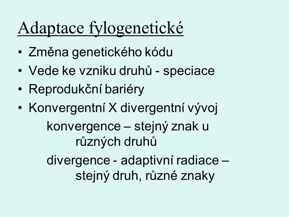 Adaptace fylogenetické Změna genetického kódu Vede ke vzniku druhů - speciace Reprodukční bariéry Konvergentní X divergentní vývoj konvergence – stejný znak u různých druhů divergence - adaptivní radiace – stejný druh, různé znaky