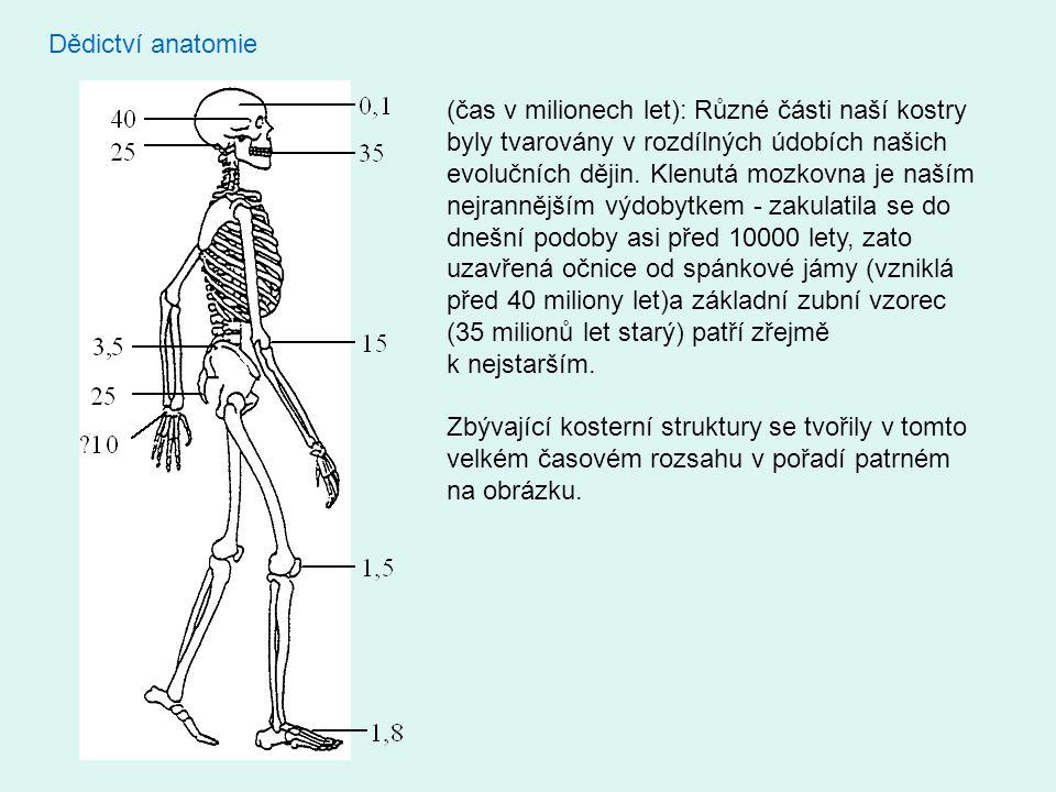 Dědictví anatomie (čas v milionech let): Různé části naší kostry byly tvarovány v rozdílných údobích našich evolučních dějin. Klenutá mozkovna je naší