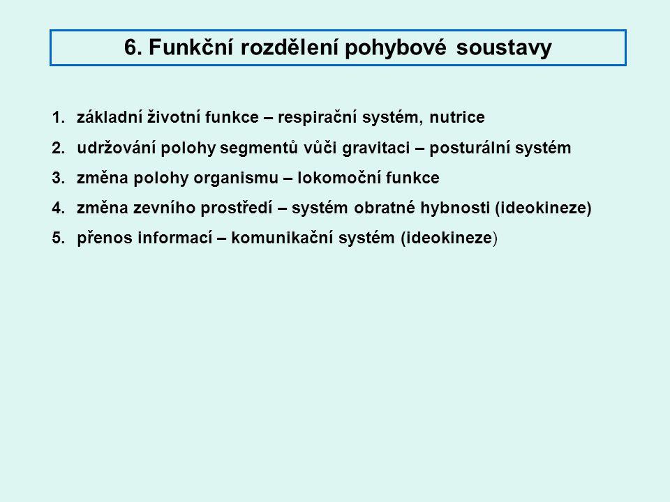 6. Funkční rozdělení pohybové soustavy 1.základní životní funkce – respirační systém, nutrice 2.udržování polohy segmentů vůči gravitaci – posturální