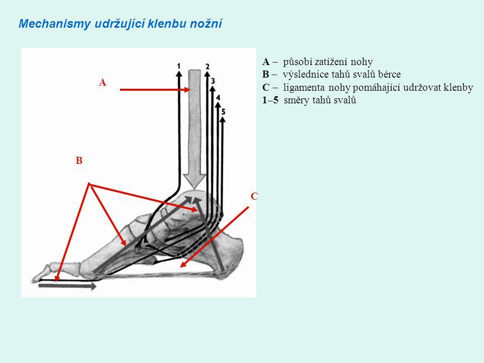 Mechanismy udržující klenbu nožní A B C A – působí zatížení nohy B – výslednice tahů svalů bérce C – ligamenta nohy pomáhající udržovat klenby 1–5 směry tahů svalů