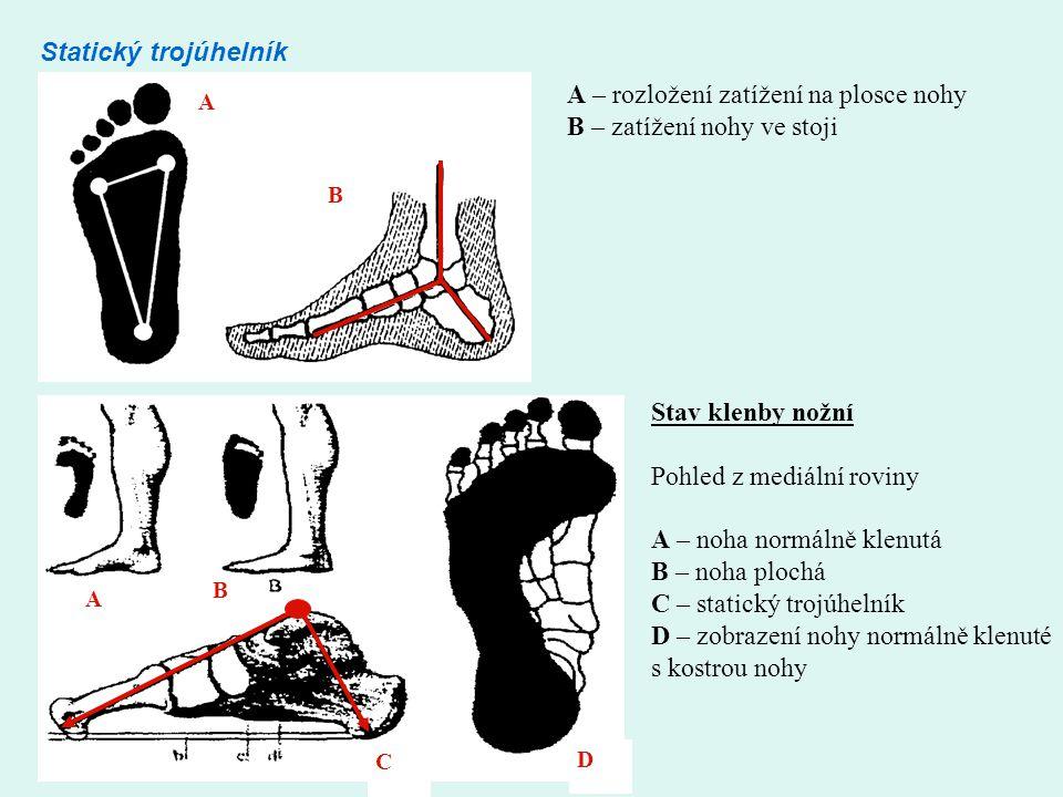 A B D A B C Statický trojúhelník A – rozložení zatížení na plosce nohy B – zatížení nohy ve stoji Stav klenby nožní Pohled z mediální roviny A – noha normálně klenutá B – noha plochá C – statický trojúhelník D – zobrazení nohy normálně klenuté s kostrou nohy