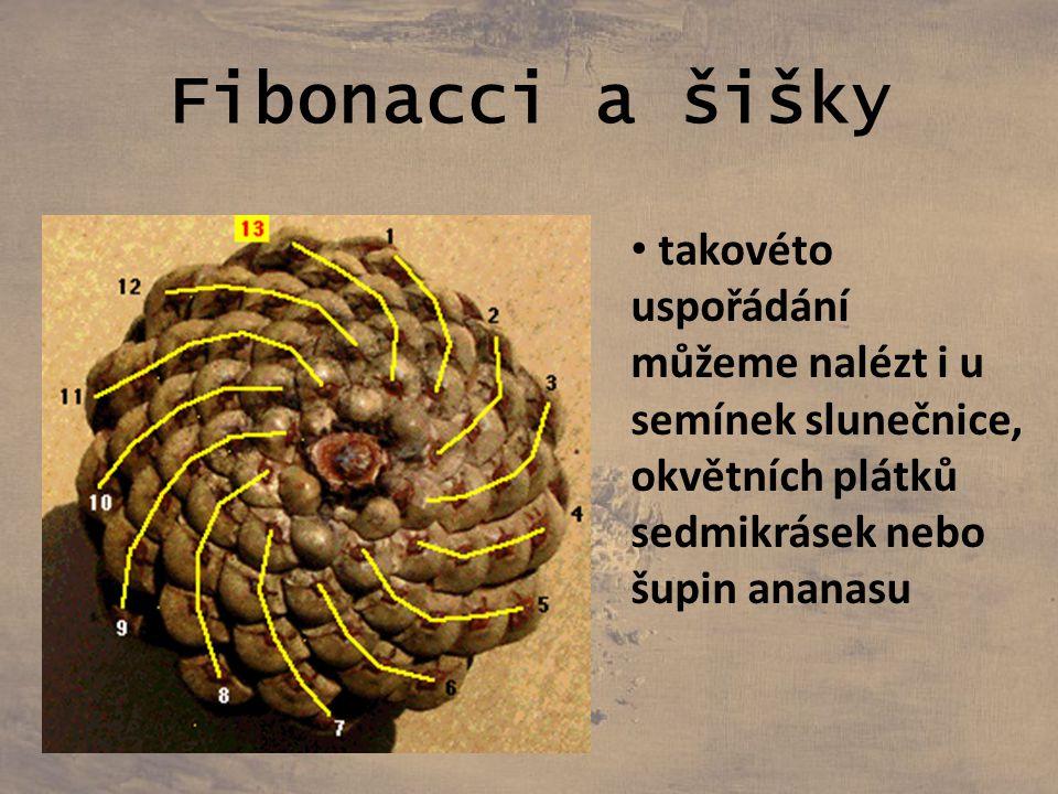 Fibonacci a šišky takovéto uspořádání můžeme nalézt i u semínek slunečnice, okvětních plátků sedmikrásek nebo šupin ananasu