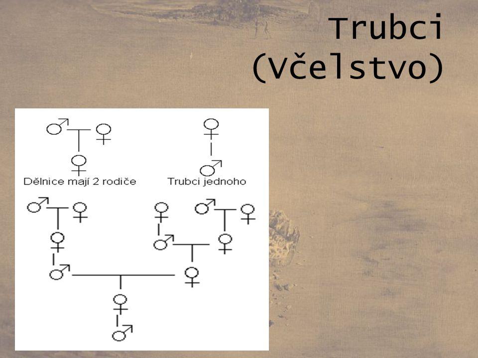 Posloupnosti Definované předpisem Nazýváme podle Theodora Lucase Fibonacciho Spojitost s φ