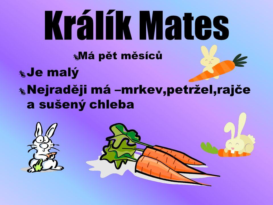 Králík Mates MMá pět měsíců JJe malý NNejraději má –mrkev,petržel,rajče a sušený chleba