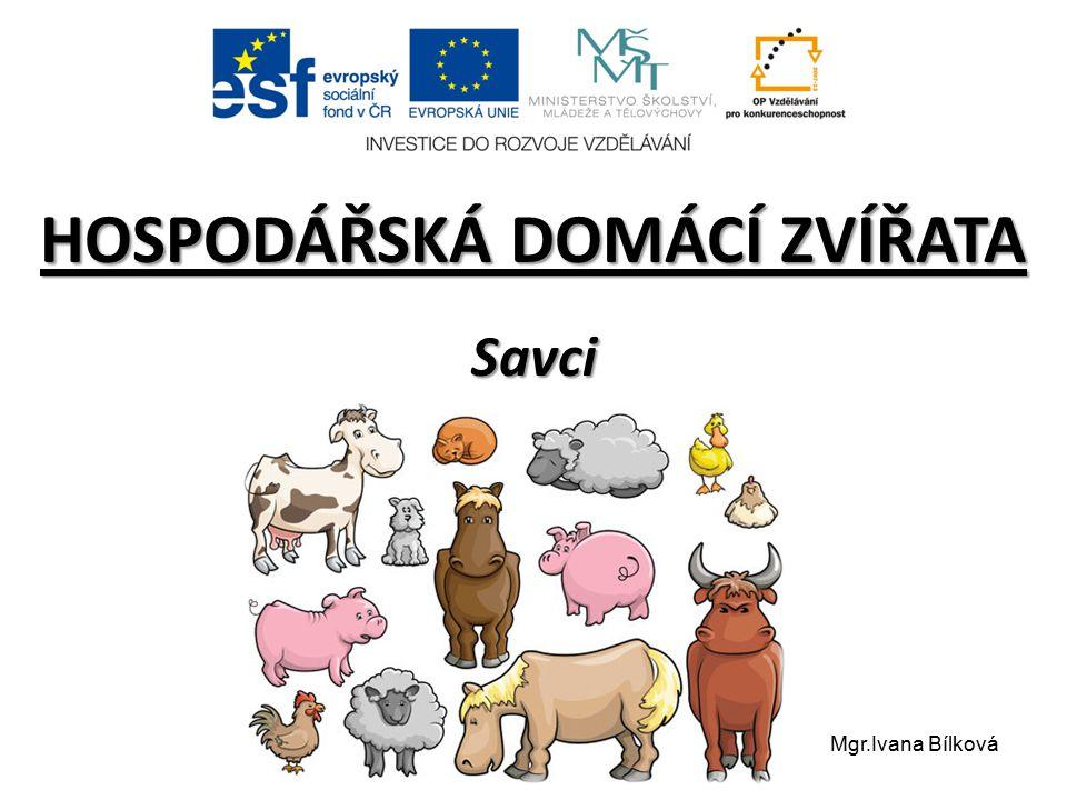 HOSPODÁŘSKÁ DOMÁCÍ ZVÍŘATA Savci Mgr.Ivana Bílková