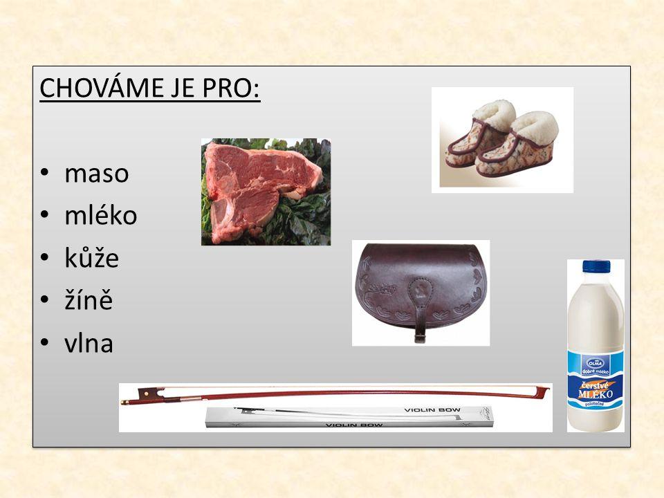 CHOVÁME JE PRO: maso mléko kůže žíně vlna CHOVÁME JE PRO: maso mléko kůže žíně vlna