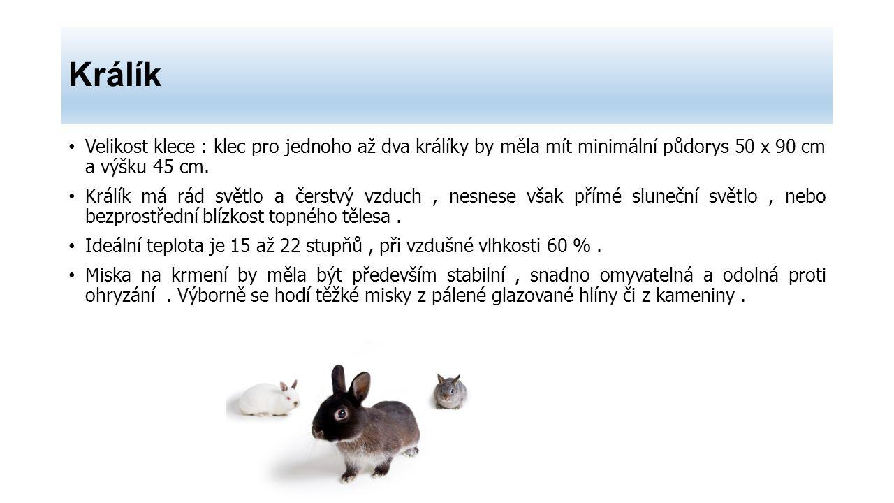 Králík Velikost klece : klec pro jednoho až dva králíky by měla mít minimální půdorys 50 x 90 cm a výšku 45 cm. Králík má rád světlo a čerstvý vzduch,