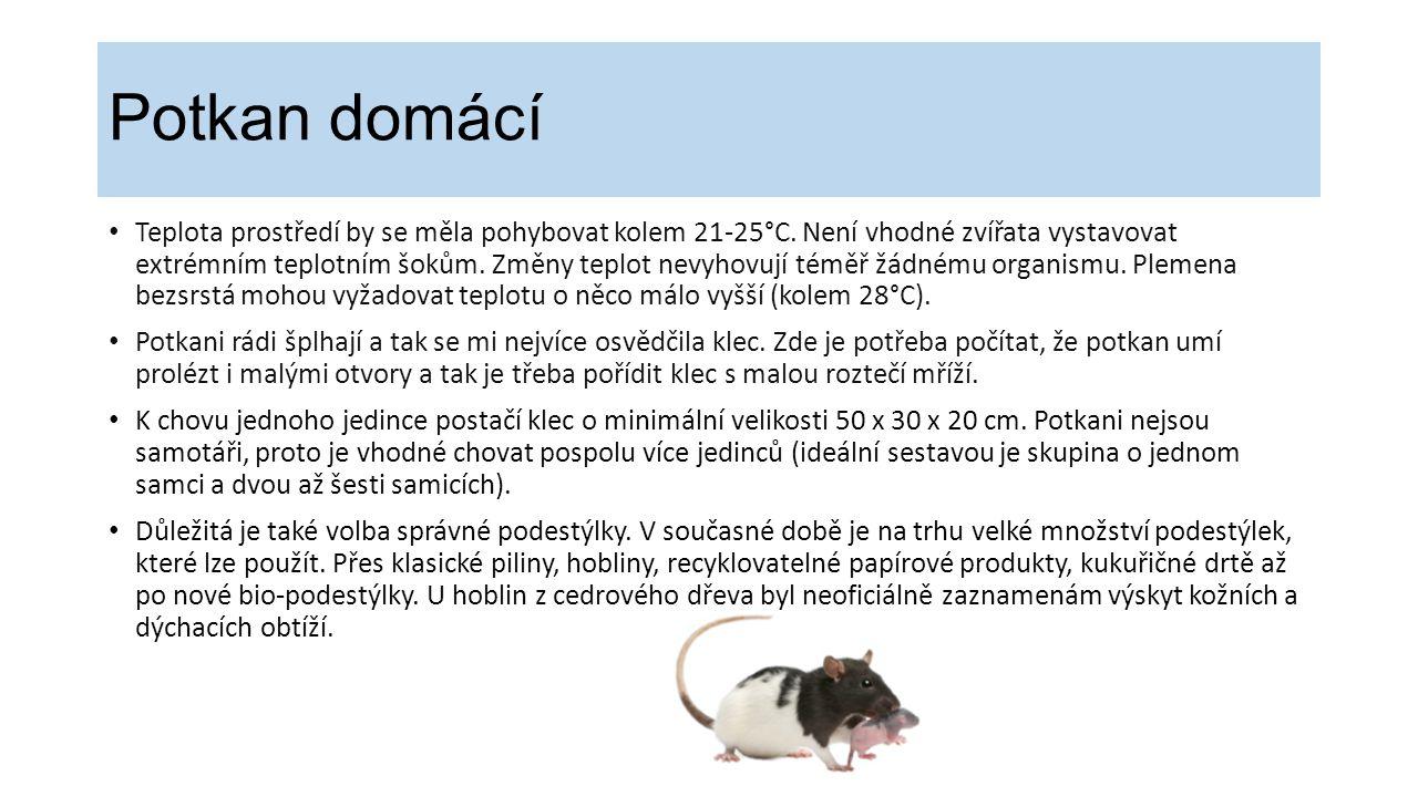 Potkan domácí Teplota prostředí by se měla pohybovat kolem 21-25°C. Není vhodné zvířata vystavovat extrémním teplotním šokům. Změny teplot nevyhovují