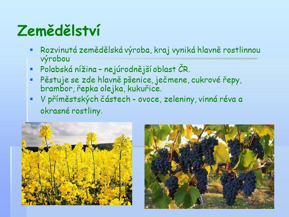 Zemědělství   Rozvinutá zemědělská výroba, kraj vyniká hlavně rostlinnou výrobou   Polabská nížina – nejúrodnější oblast ČR.