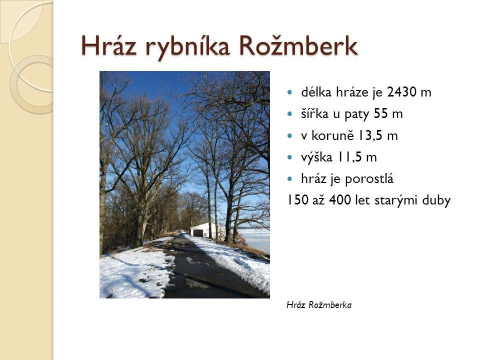 Hráz rybníka Rožmberk délka hráze je 2430 m šířka u paty 55 m v koruně 13,5 m výška 11,5 m hráz je porostlá 150 až 400 let starými duby Hráz Rožmberka