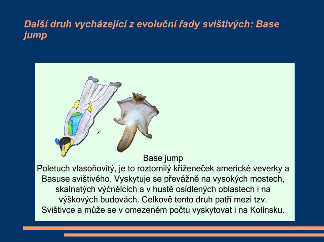 Další druh vycházející z evoluční řady svištivých: Swoop