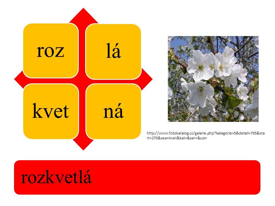 roz lákvetná rozkvetlá http://www.fotokatalog.cz/galerie.php?kategorie=5&detail=705&sta rt=270&sea=kvet&kat=&ser=&uzi=
