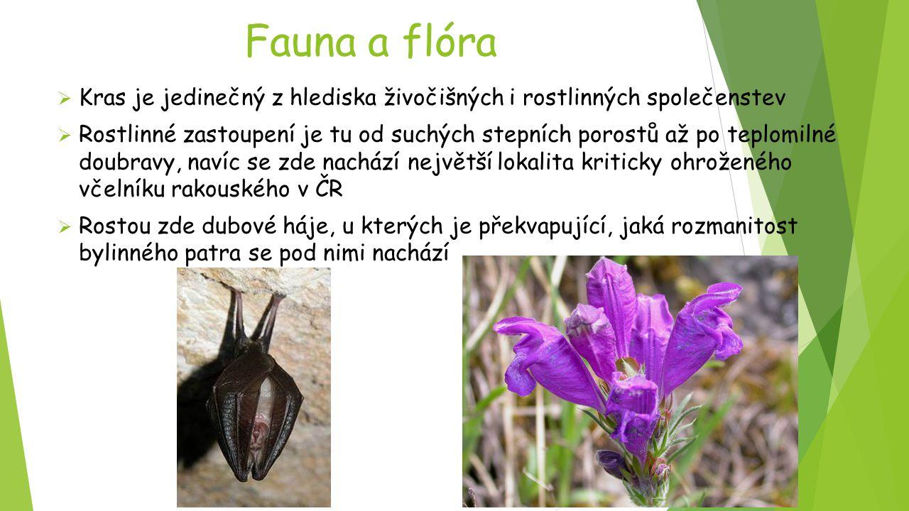 Fauna a flóra  Kras je jedinečný z hlediska živočišných i rostlinných společenstev  Rostlinné zastoupení je tu od suchých stepních porostů až po tep
