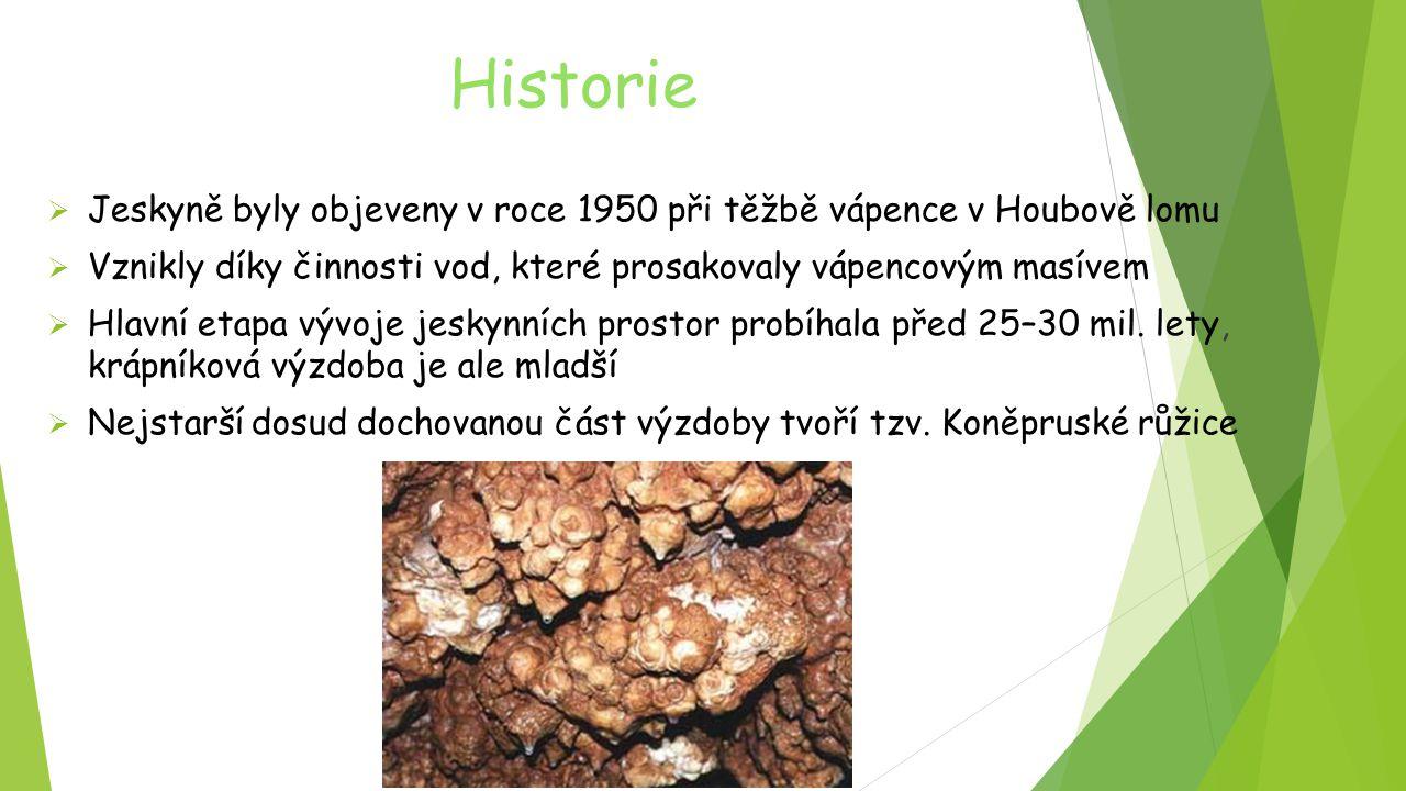 Historie  Jeskyně byly objeveny v roce 1950 při těžbě vápence v Houbově lomu  Vznikly díky činnosti vod, které prosakovaly vápencovým masívem  Hlav
