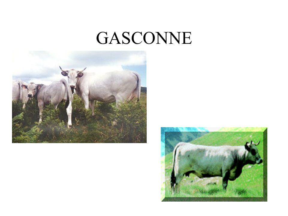 GASCONNE