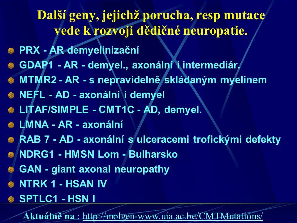 Další geny, jejichž porucha, resp mutace vede k rozvoji dědičné neuropatie. PRX - AR demyelinizační GDAP1 - AR - demyel., axonální i intermediár. MTMR