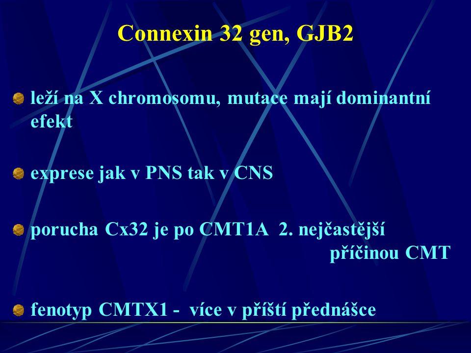 Connexin 32 gen, GJB2 leží na X chromosomu, mutace mají dominantní efekt exprese jak v PNS tak v CNS porucha Cx32 je po CMT1A 2. nejčastější příčinou