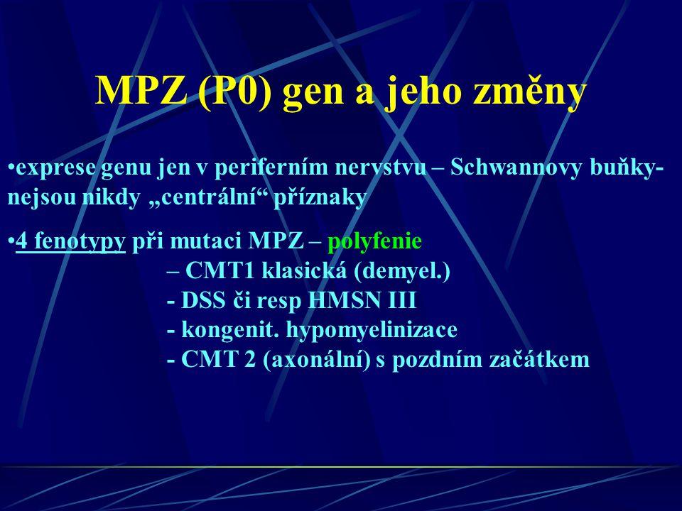 """MPZ (P0) gen a jeho změny exprese genu jen v periferním nervstvu – Schwannovy buňky- nejsou nikdy """"centrální"""" příznaky 4 fenotypy při mutaci MPZ – pol"""