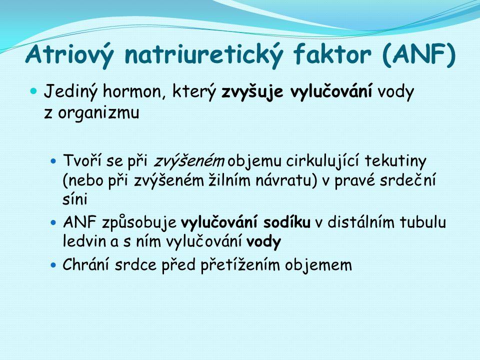 Atriový natriuretický faktor (ANF) Jediný hormon, který zvyšuje vylučování vody z organizmu Tvoří se při zvýšeném objemu cirkulující tekutiny (nebo př