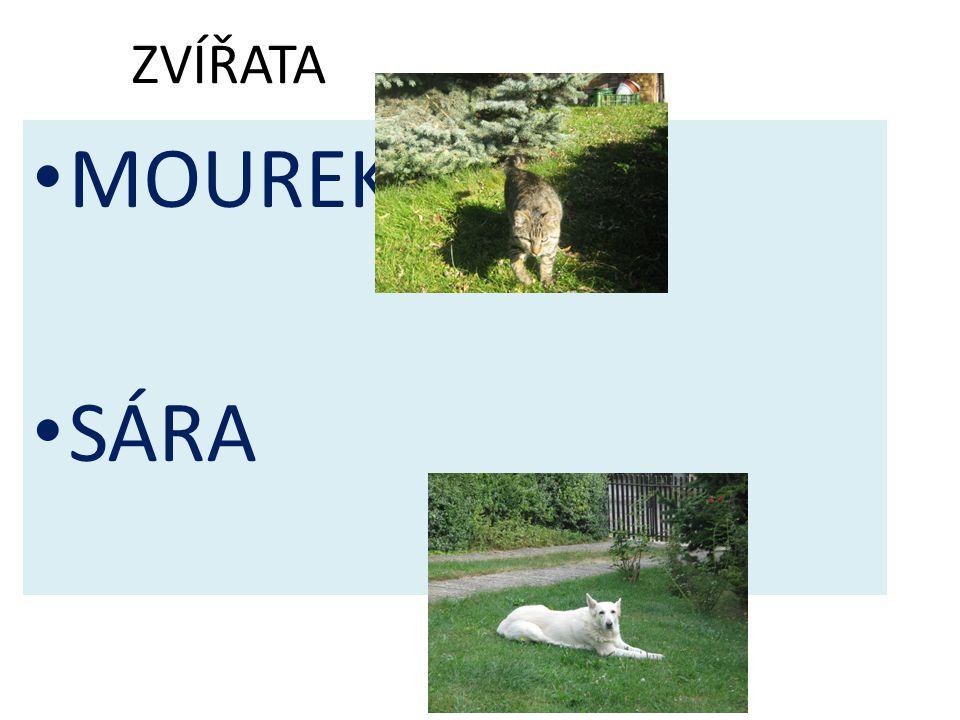 ZVÍŘATA MOUREK SÁRA