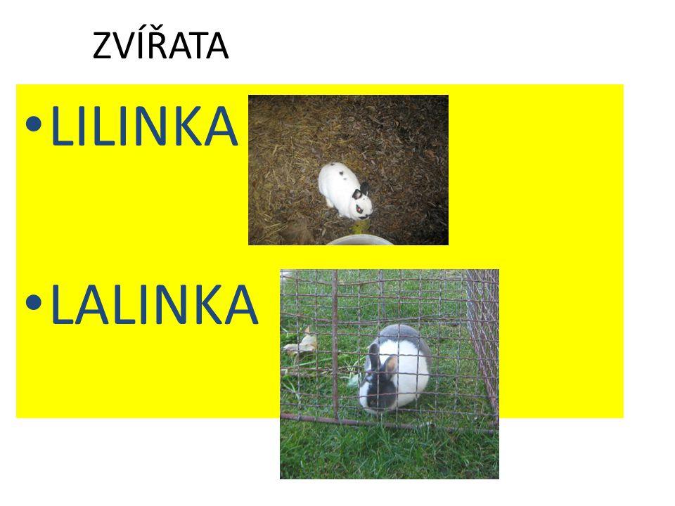 ZVÍŘATA LILINKA LALINKA