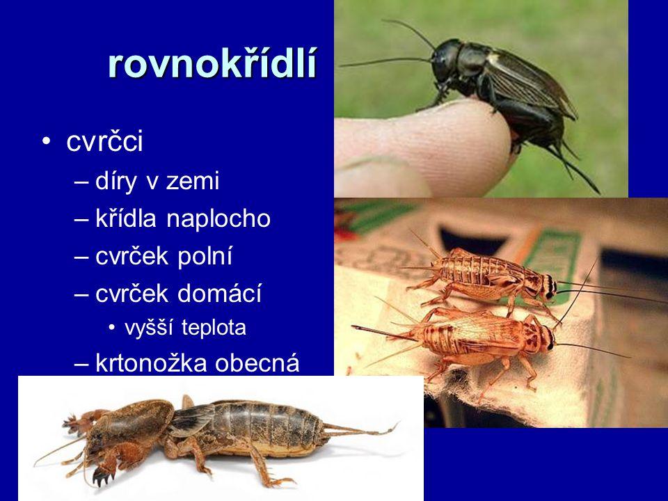 rovnokřídlí cvrčci –díry v zemi –křídla naplocho –cvrček polní –cvrček domácí vyšší teplota –krtonožka obecná