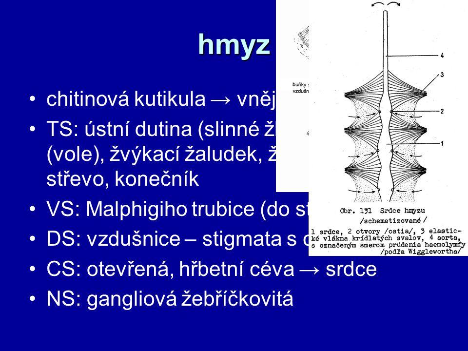 hmyz chitinová kutikula → vnější kostra TS: ústní dutina (slinné žlázy), hltan, jícen (vole), žvýkací žaludek, žlaznatý žaludek, střevo, konečník VS: