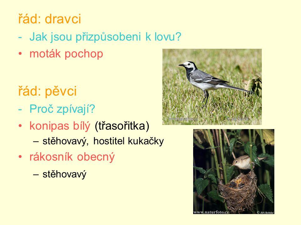 řád: dravci -Jak jsou přizpůsobeni k lovu. moták pochop řád: pěvci -Proč zpívají.