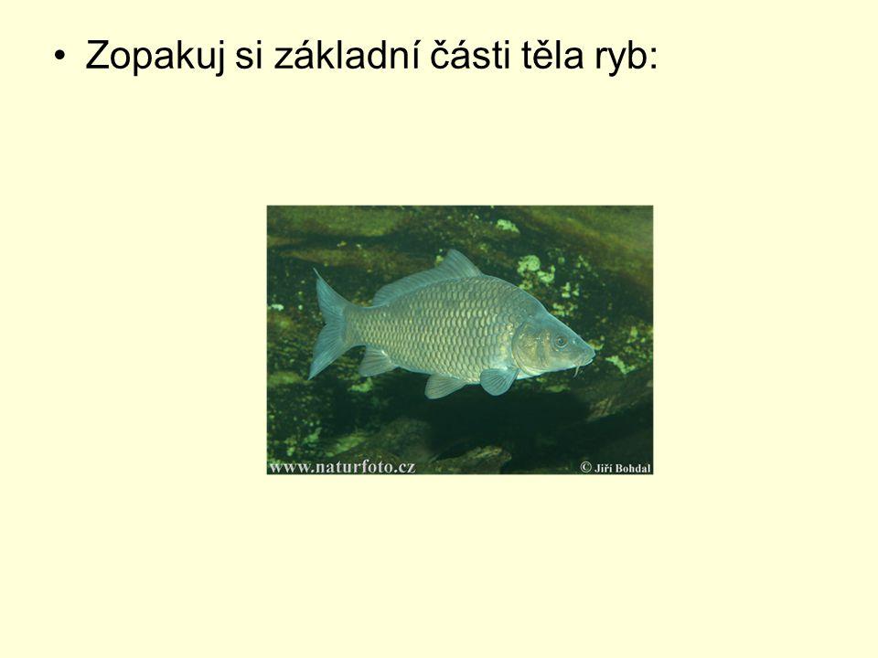 Zopakuj si základní části těla ryb: