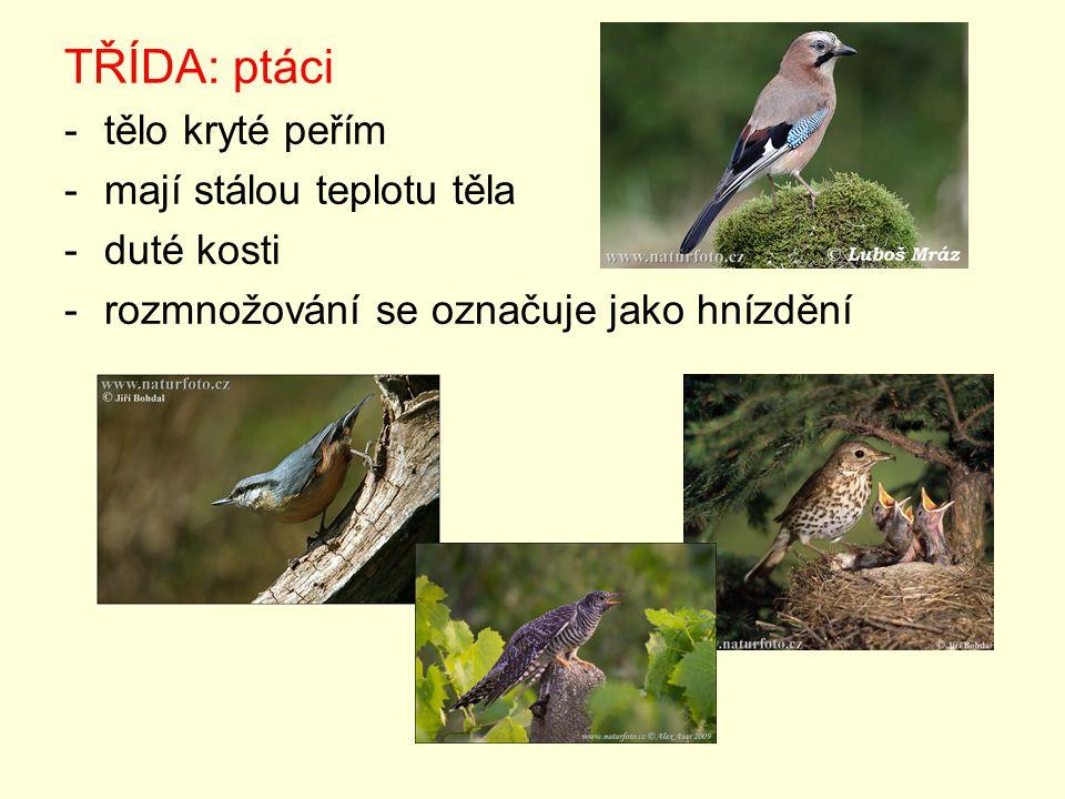 TŘÍDA: ptáci -tělo kryté peřím -mají stálou teplotu těla -duté kosti -rozmnožování se označuje jako hnízdění