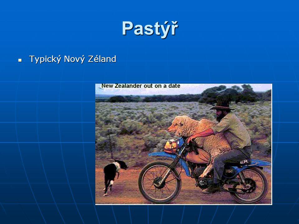 Pastýř Typický Nový Zéland Typický Nový Zéland