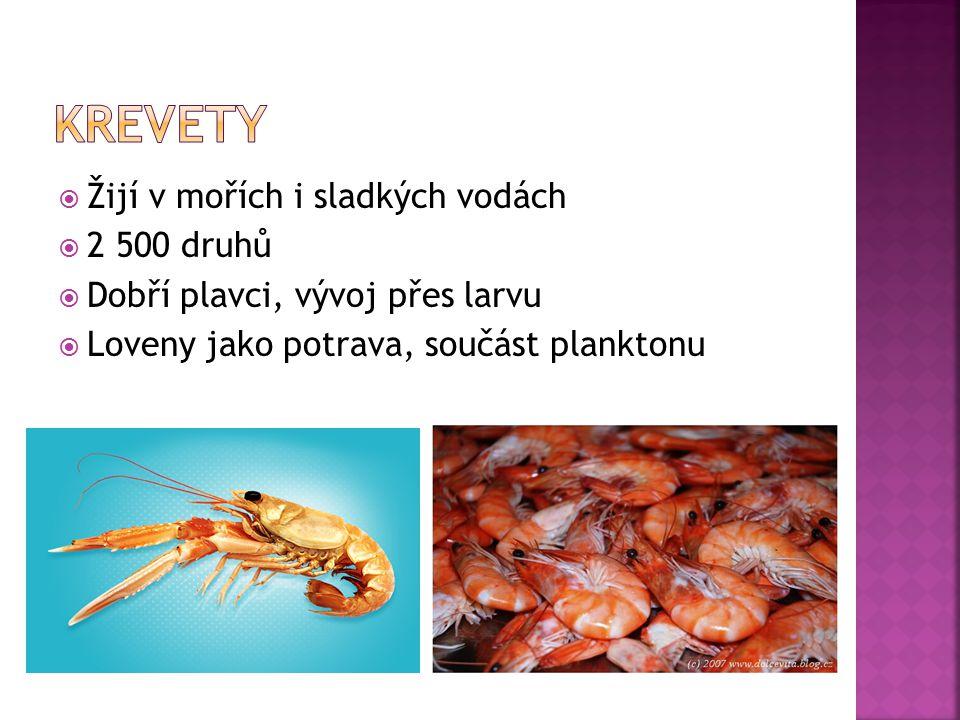  Žijí v mořích i sladkých vodách  2 500 druhů  Dobří plavci, vývoj přes larvu  Loveny jako potrava, součást planktonu