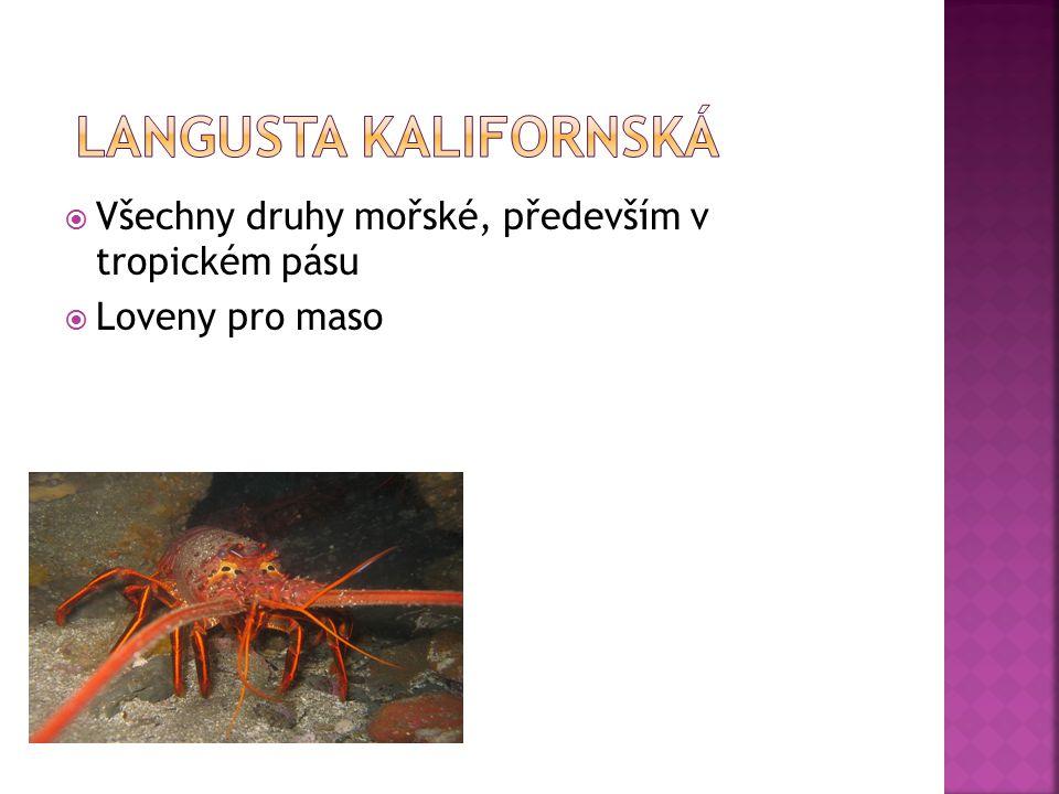  Všechny druhy mořské, především v tropickém pásu  Loveny pro maso